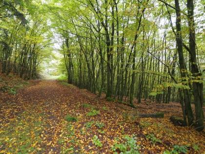 Waldimpressionen